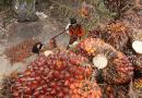 Trabajadores de plantaciones marcharán el 1º de Mayo